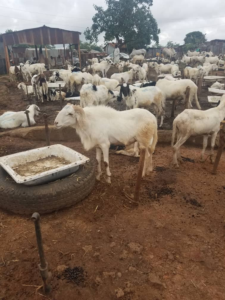qurbani donation