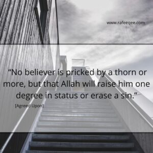 """""""No believer is pricked by a thorn or more, but that Allah will raise him one degree in status or erase a sin."""" [Agreed Upon]."""